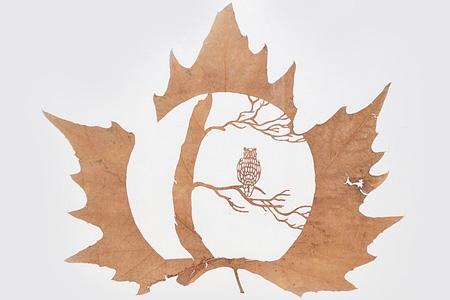 leaf05