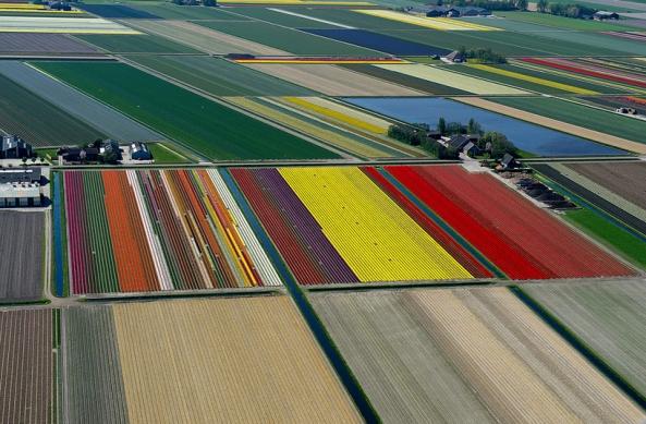 Photos Aériennes d'un champs de Tulipe (6)